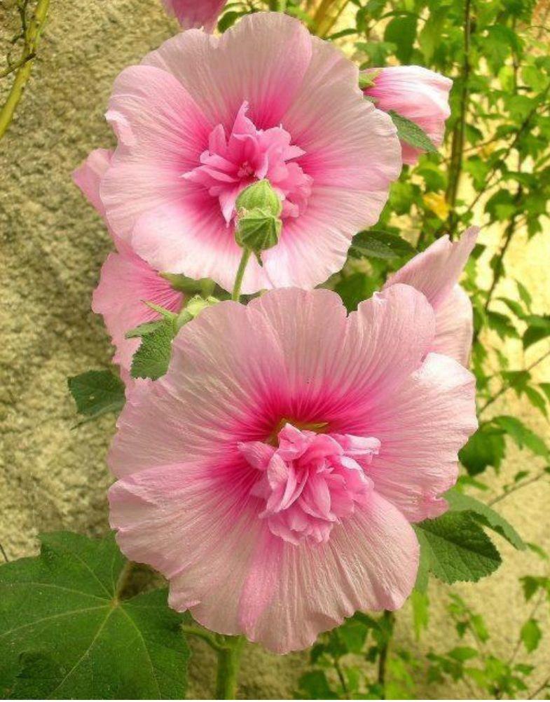 Pretty in pink | FLOWERS | Pinterest