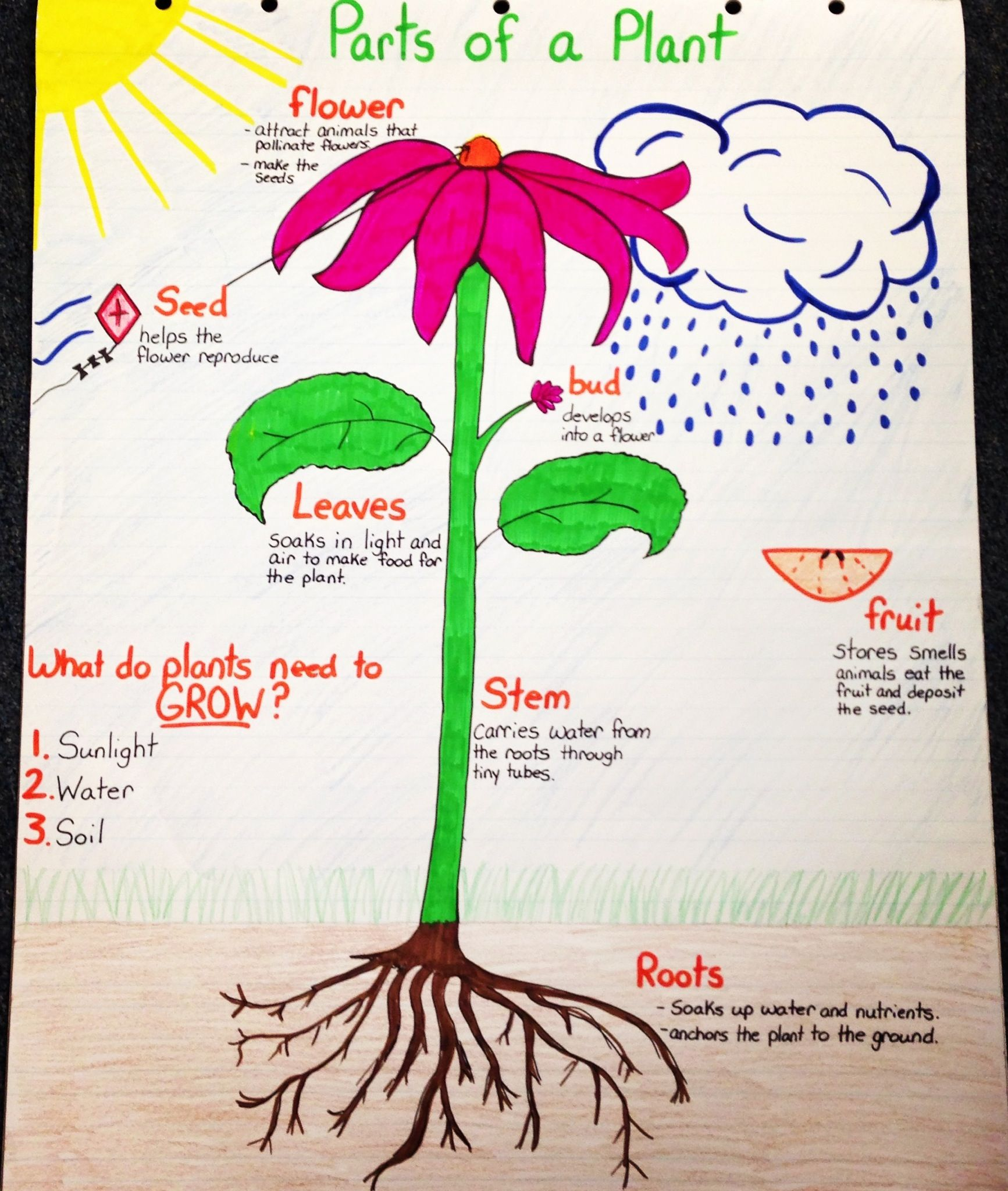 Parts of a Plant Anchor Chart Science Pinterest