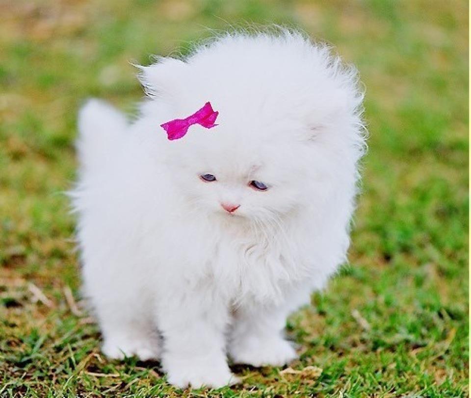 real life hello kitty ...