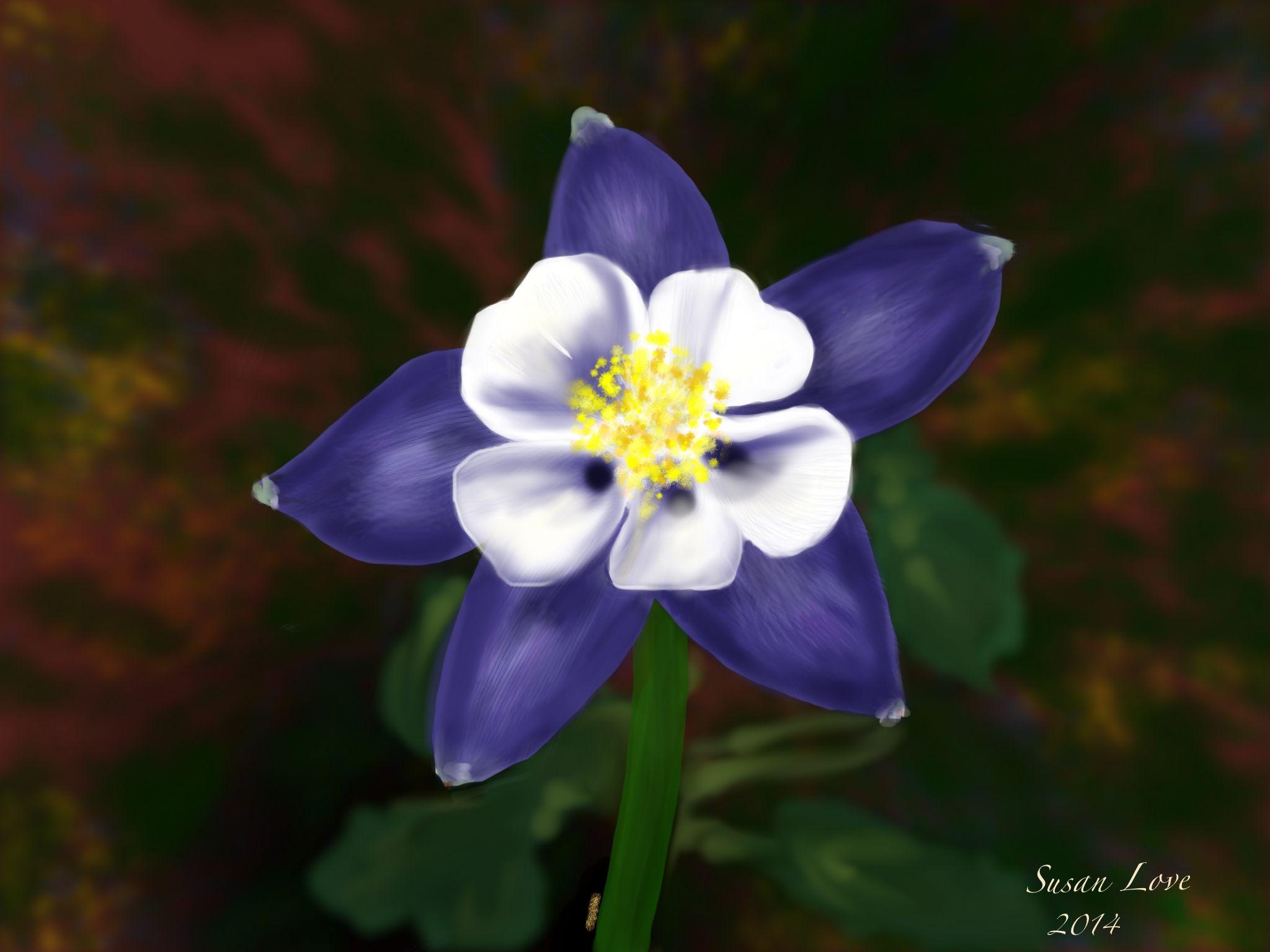 Colorado National Flower