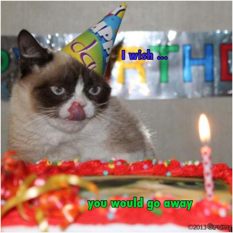 Grumpy Cat Birthday Youtube: Term Paper Cat Meme Birthday