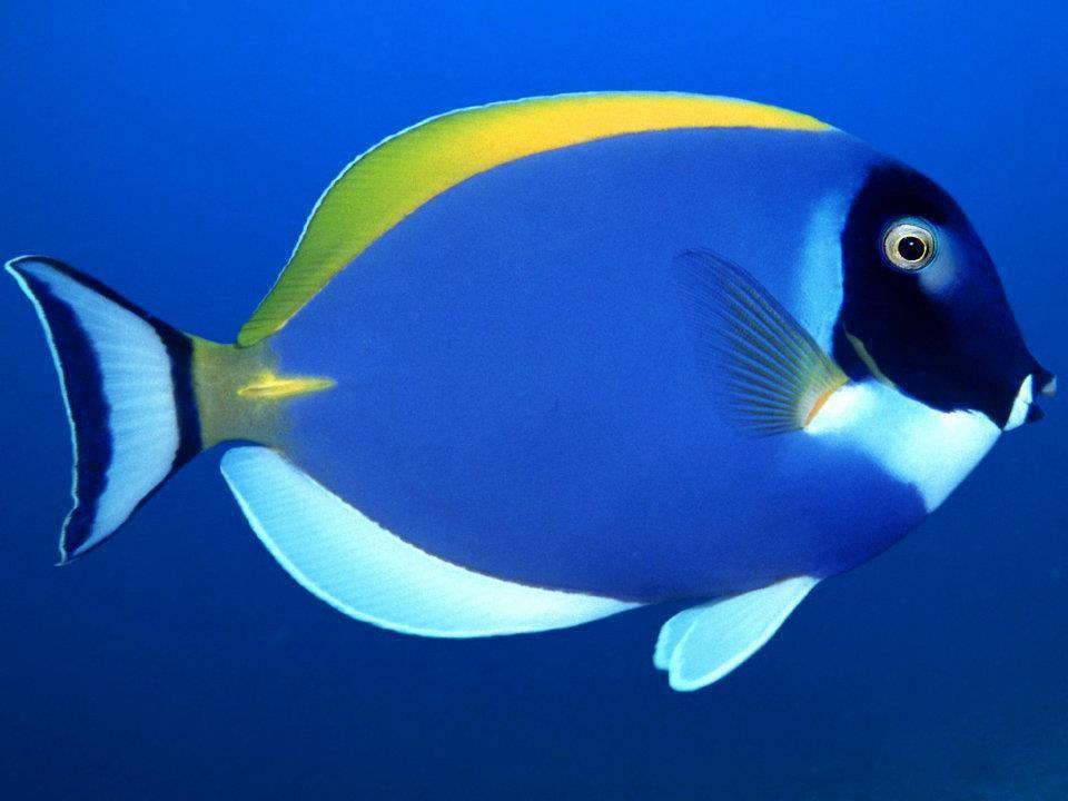 Pretty Fish Pretty Fish Pinterest