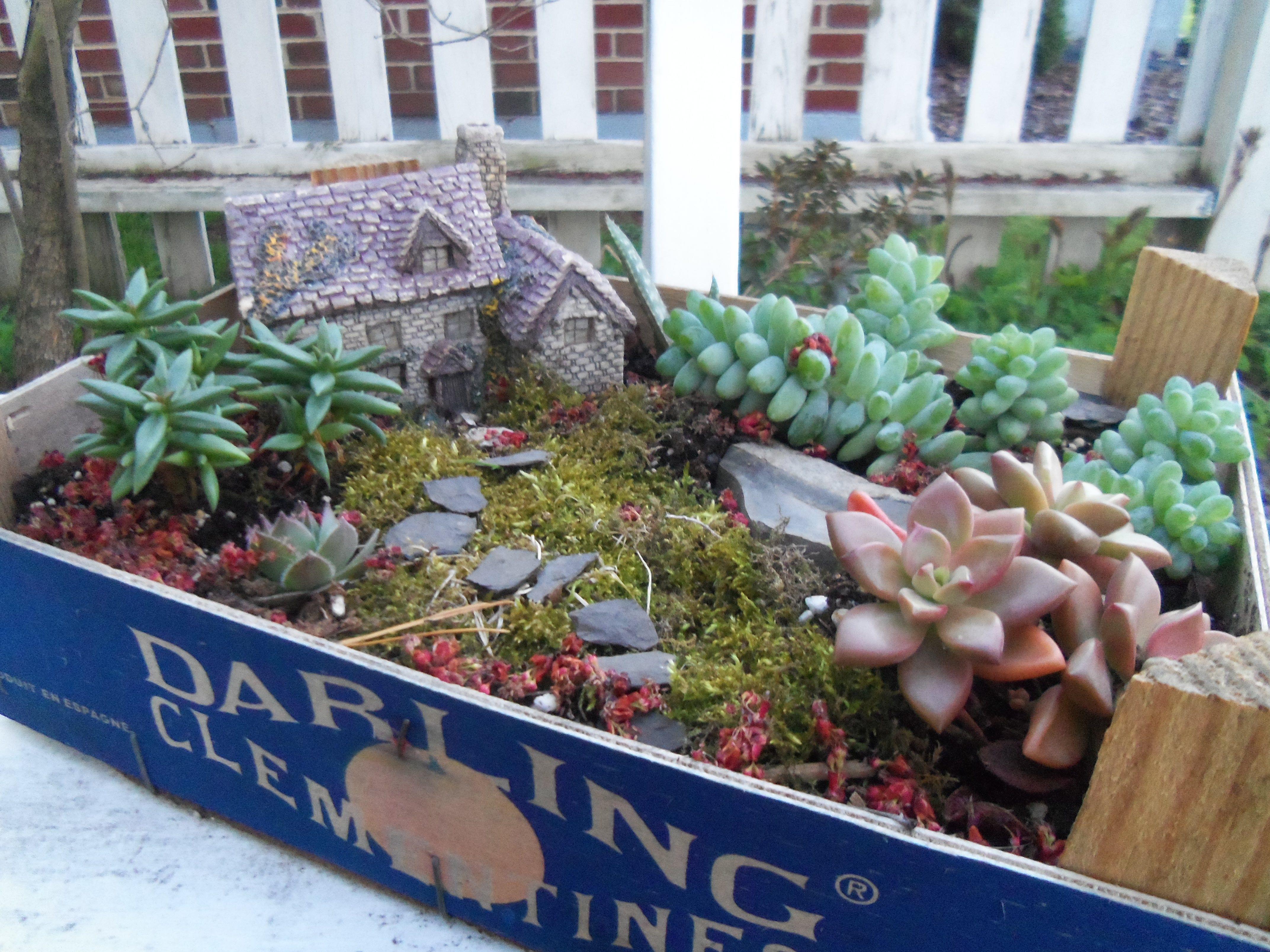 Succulent fairy garden container gardens pinterest - Fairy garden containers ...