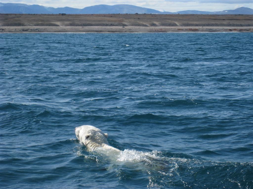 nunavut polar bear hunting