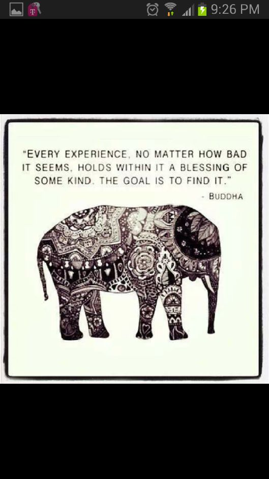 elephants quotes  quotesgram