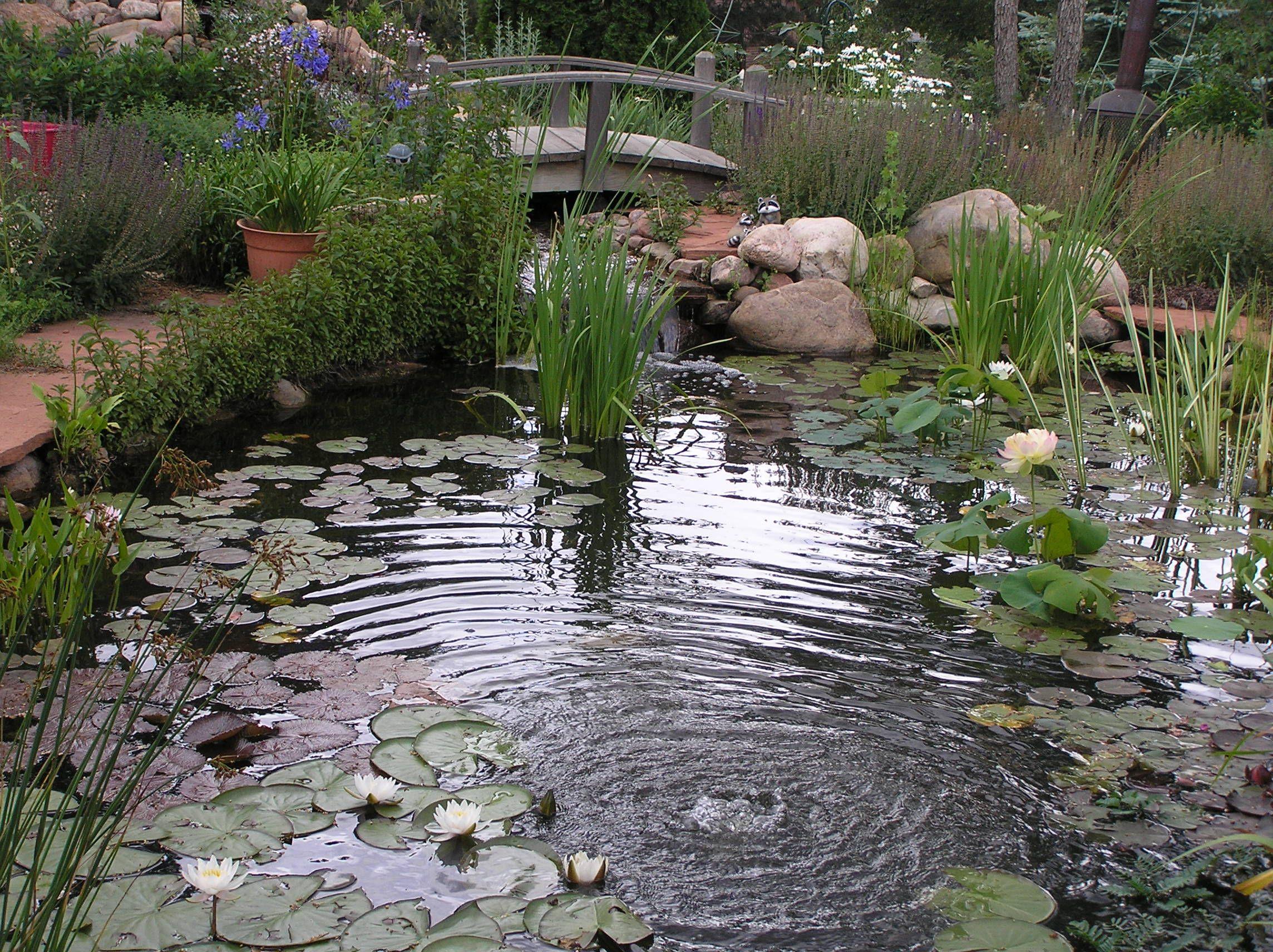 Peaceful Pond Ponds Pinterest