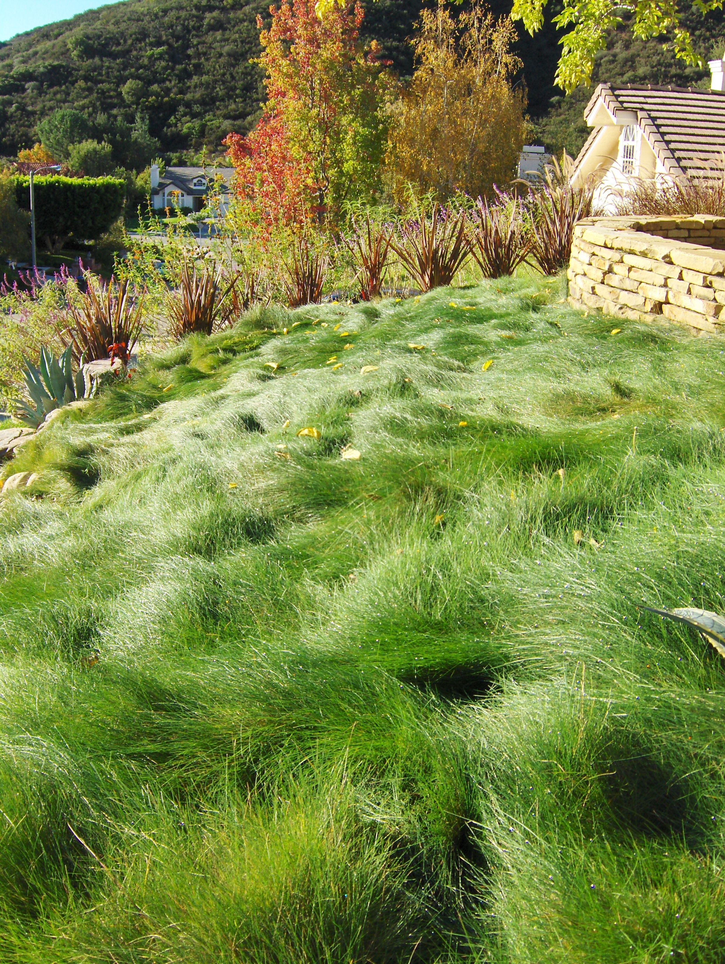 Red fescue hawkeye landscape design pinterest for Red landscaping grass