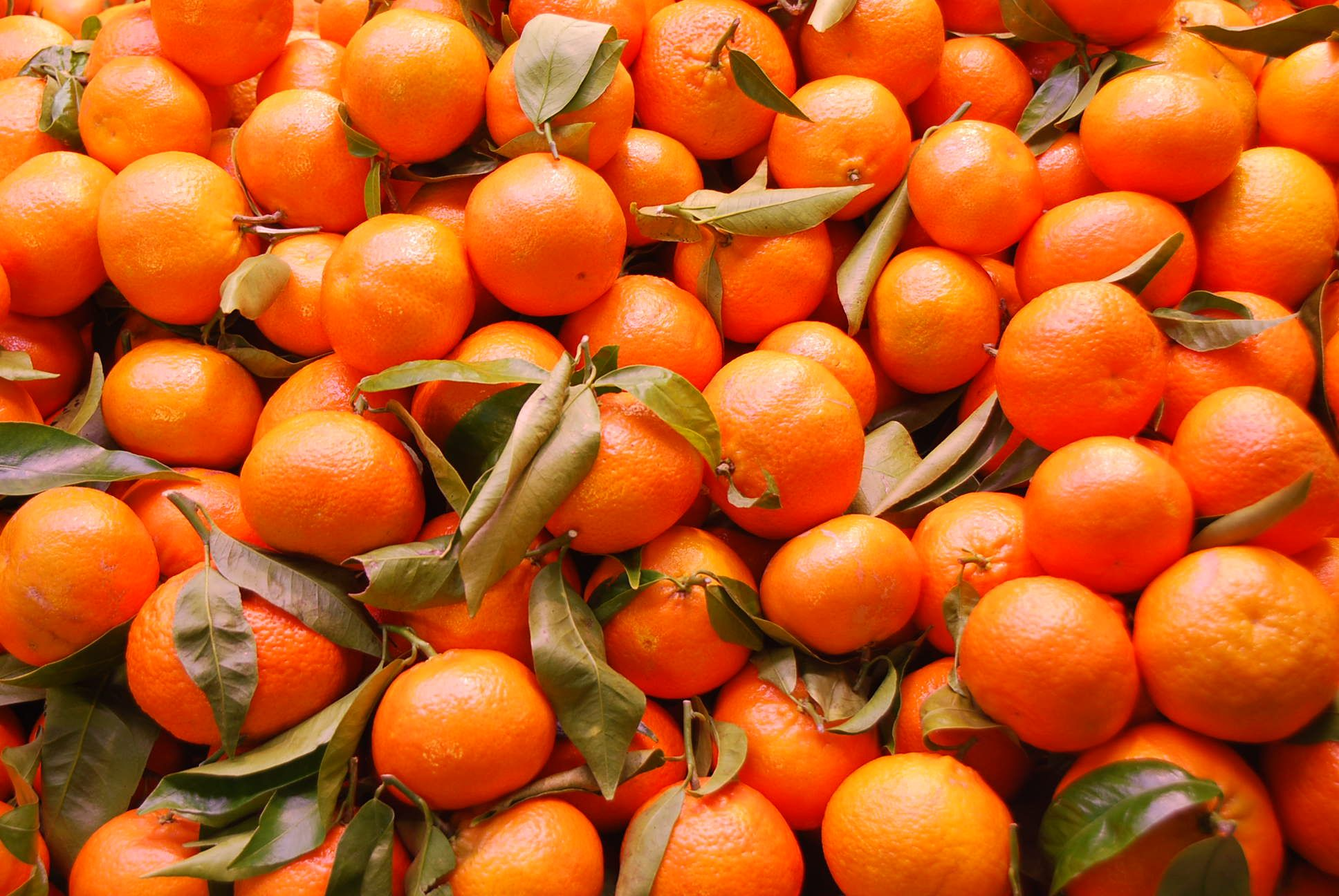 Orange Vegetables And Fruits orange | Vegetables, F...