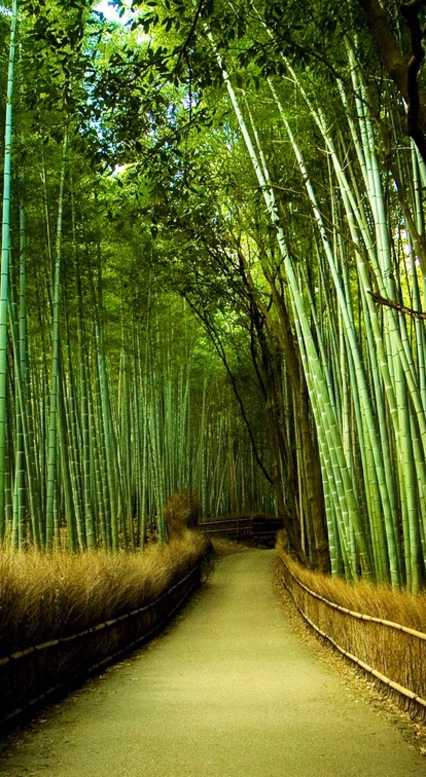 bamboo garden kyoto nature 39 s beauty pinterest