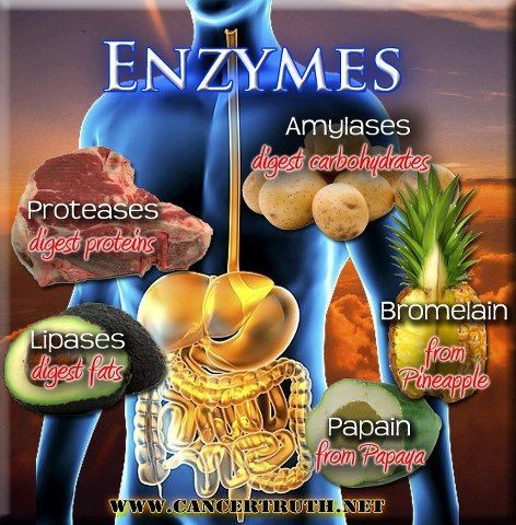 Taking digestive enzymes for leaky gut naturally