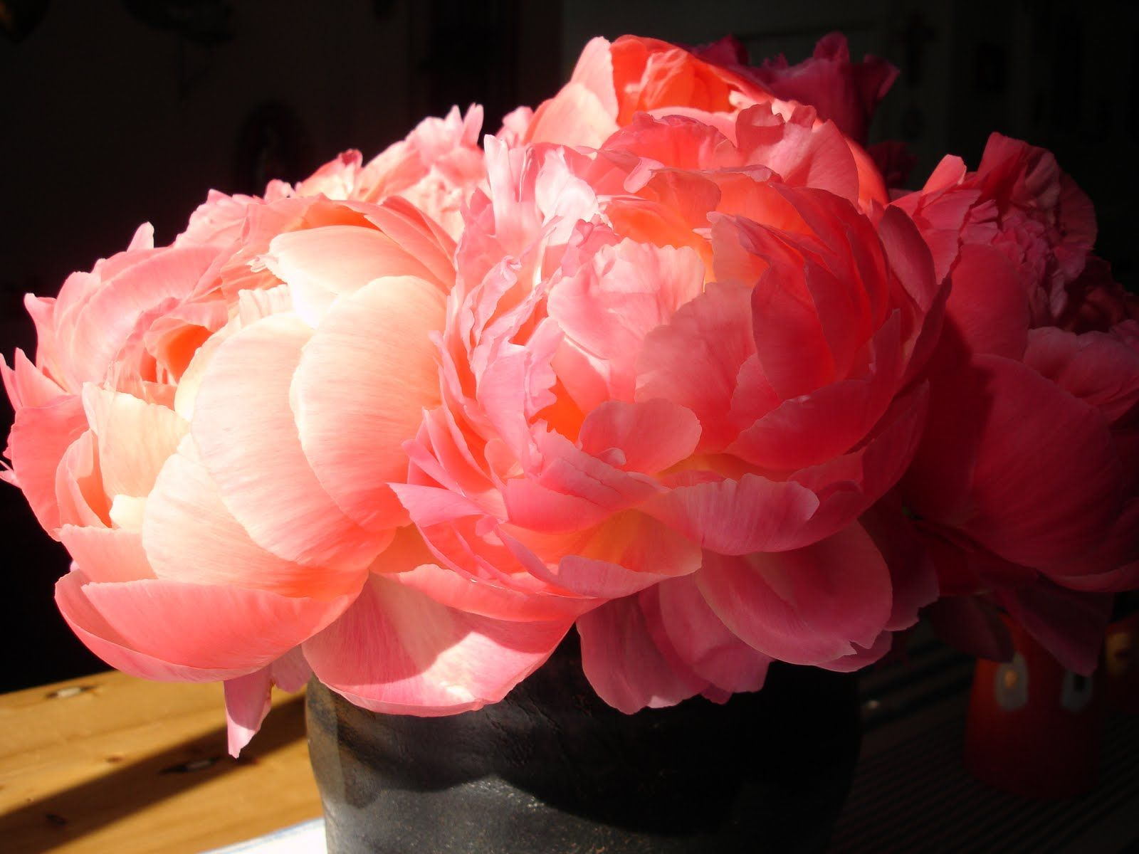coral peonies wallpapers high -#main