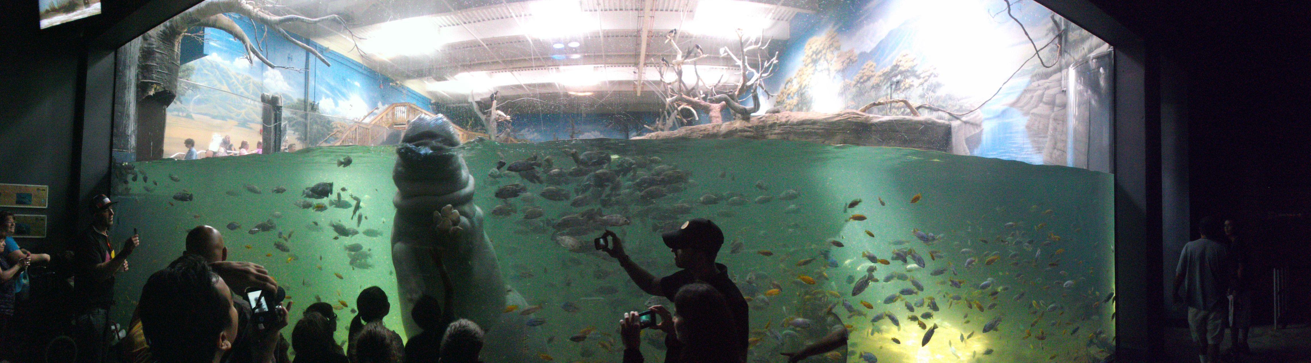 Adventure Aquarium Camden Pa Family Road Trip Pinterest