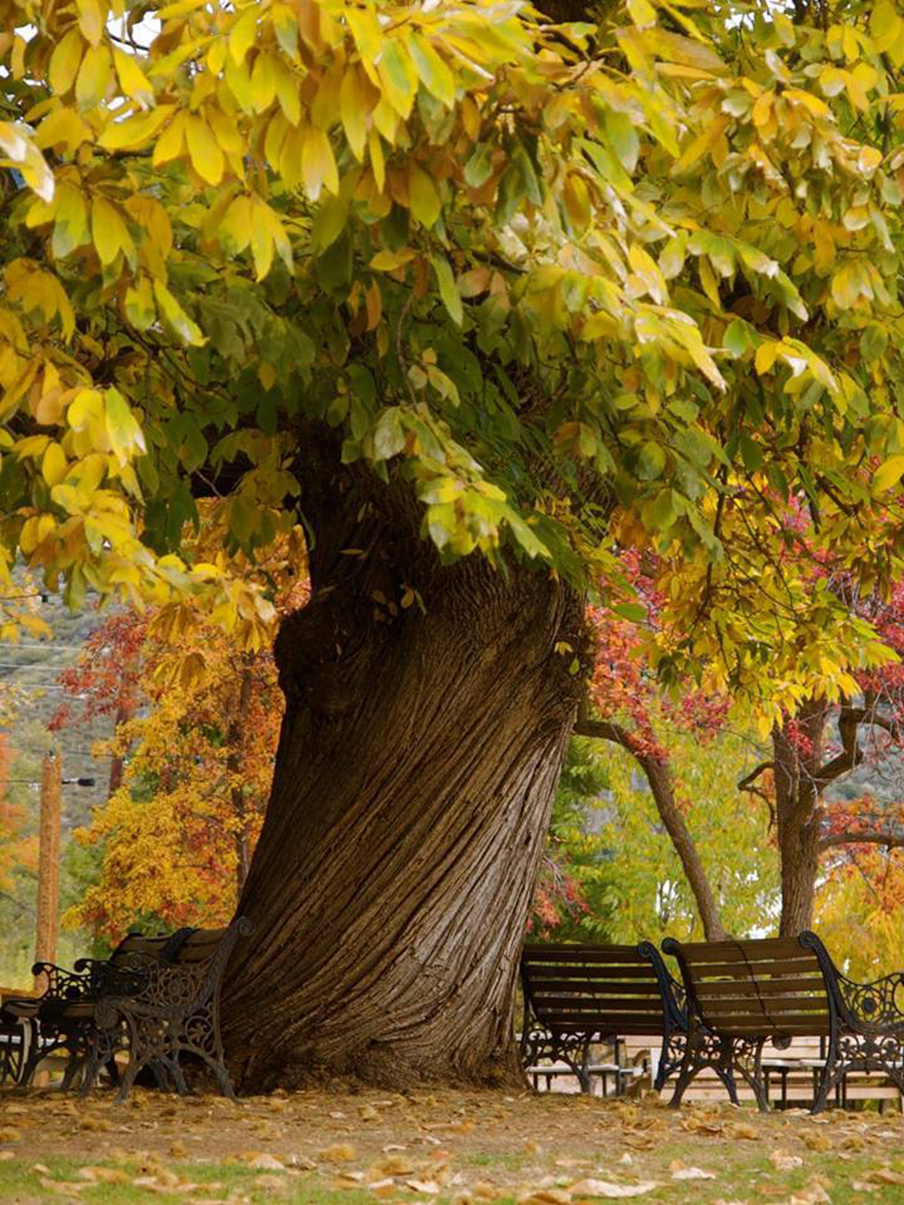 Tree in Southern California | Trees: The Beautiful & Unique | Pintere…