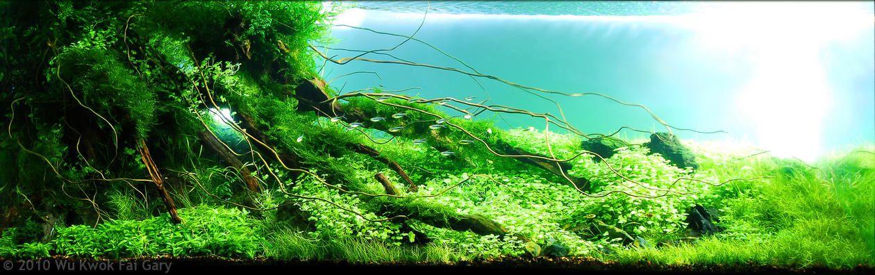 Amano style Inspirational aquascaping Pinterest