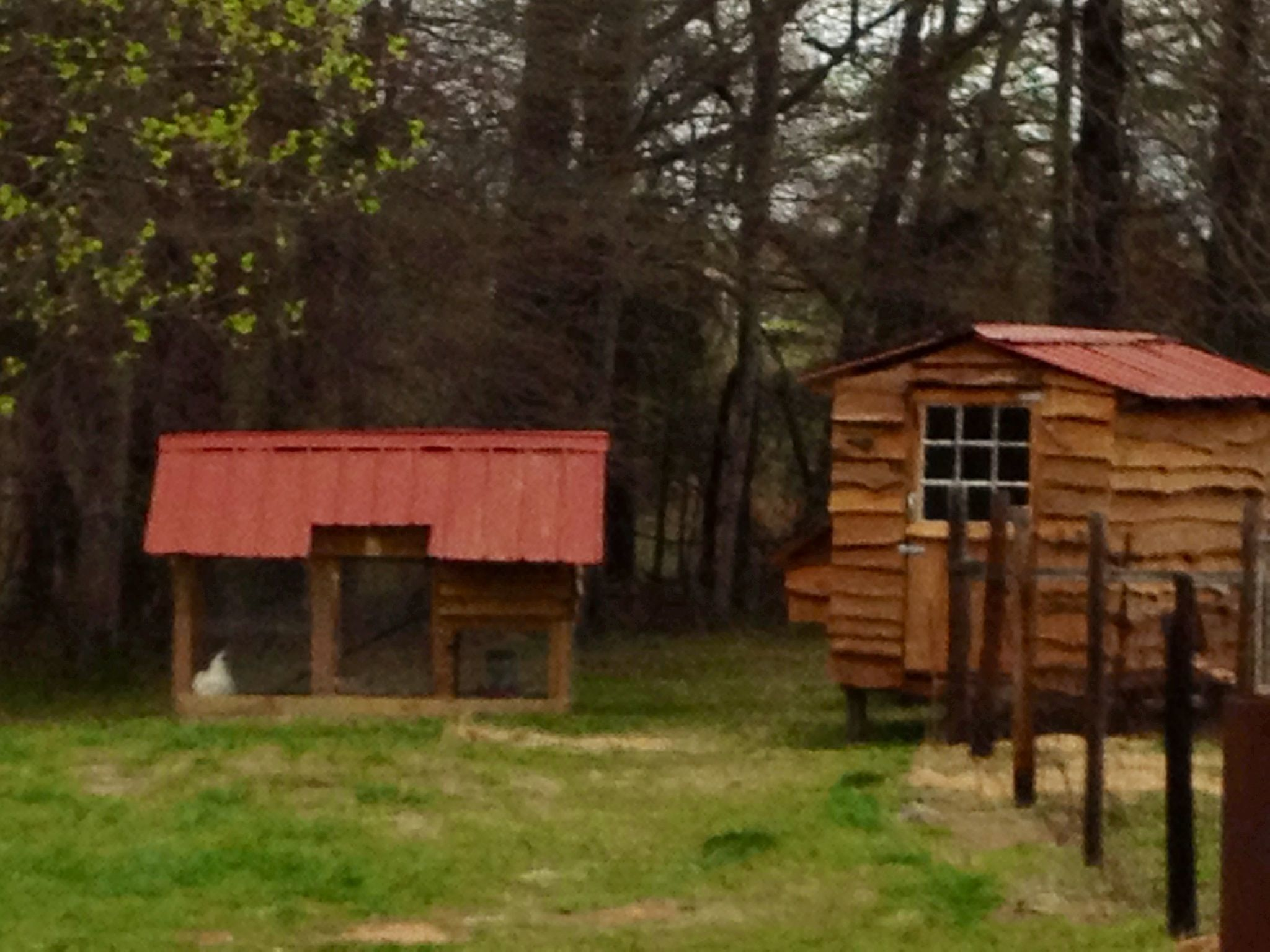 Homemade chicken coops mostly outside pinterest for Homemade chicken house