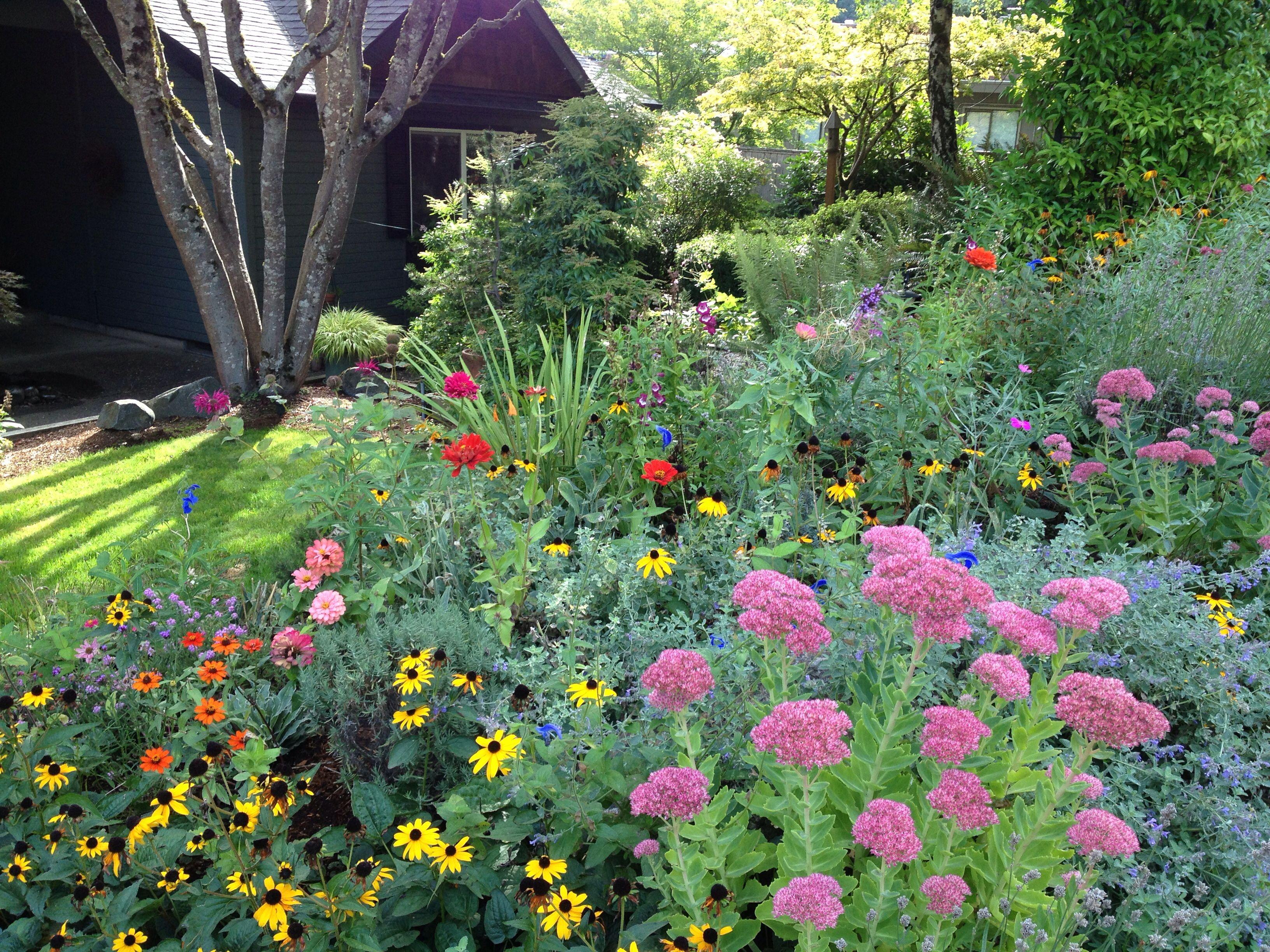 """""""Deer resistant"""" Fall perennials Heather s Garden Eugene"""