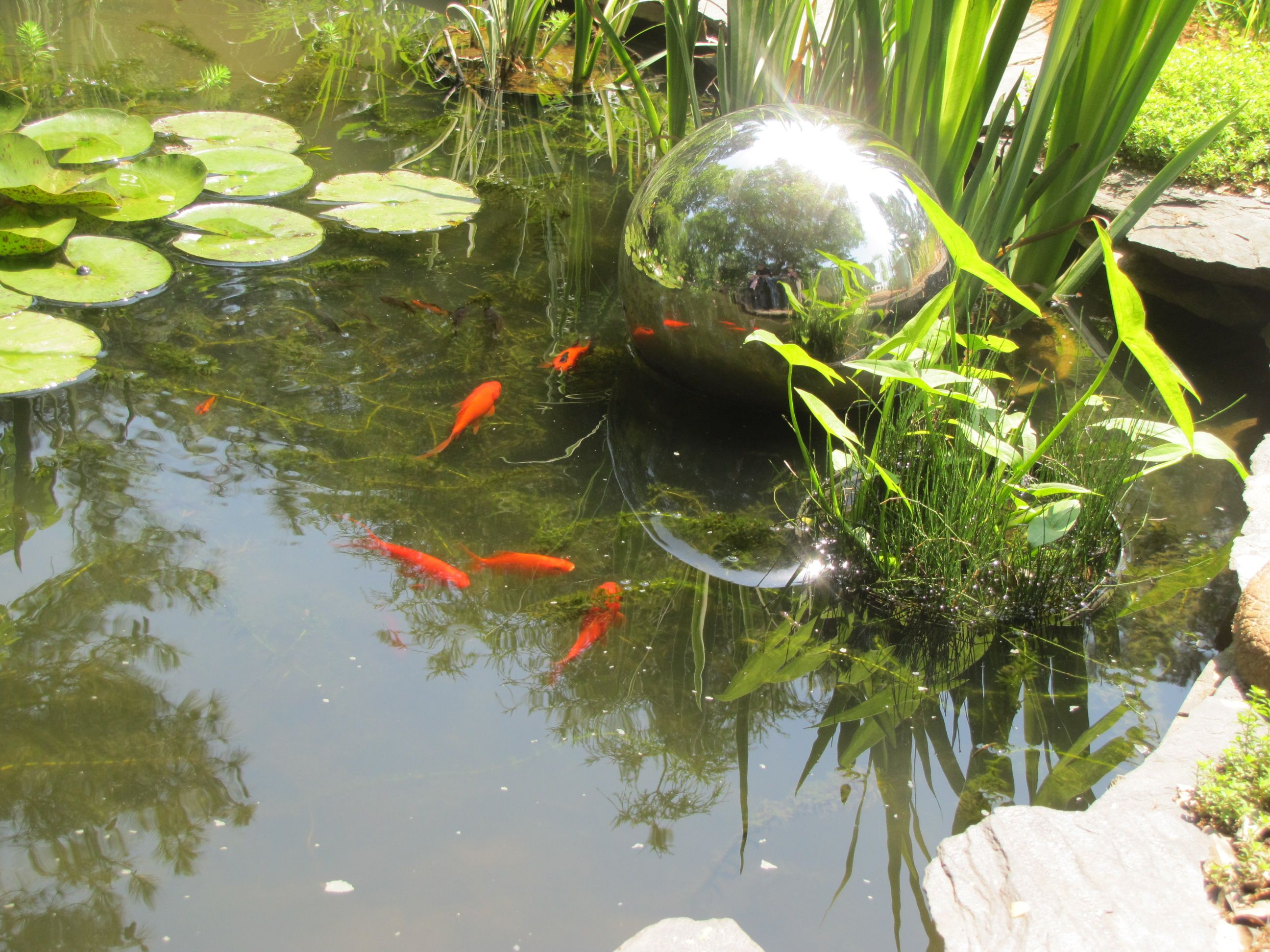 Goldfish pond outdoor goldfish pond pinterest for Goldfish pond