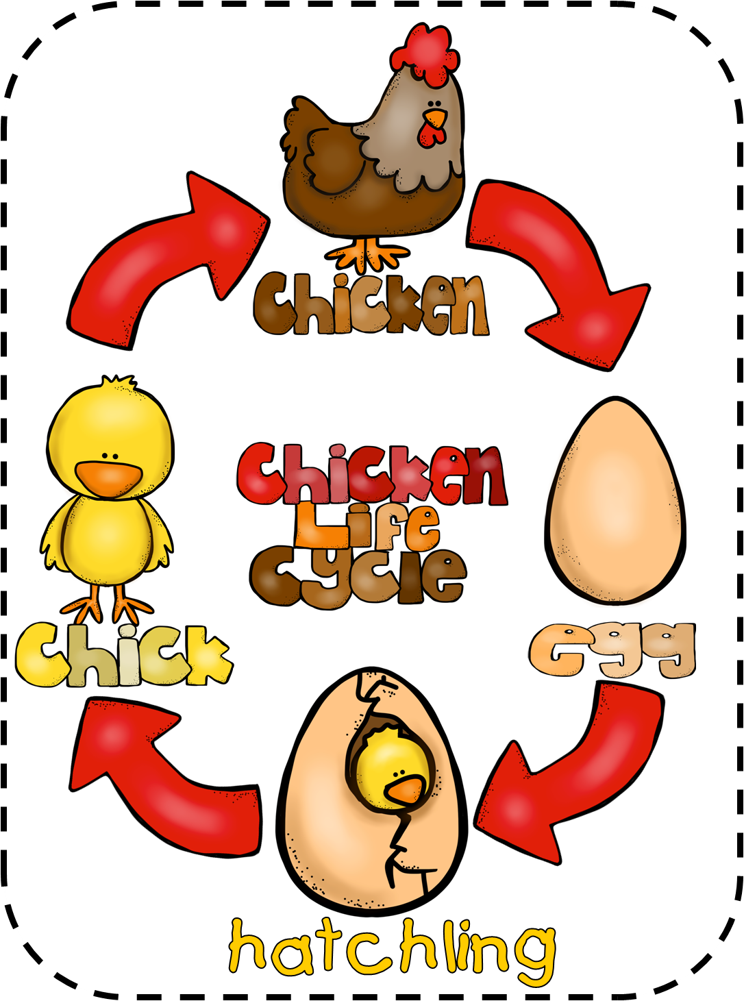 Life cycle of a chicken worksheet