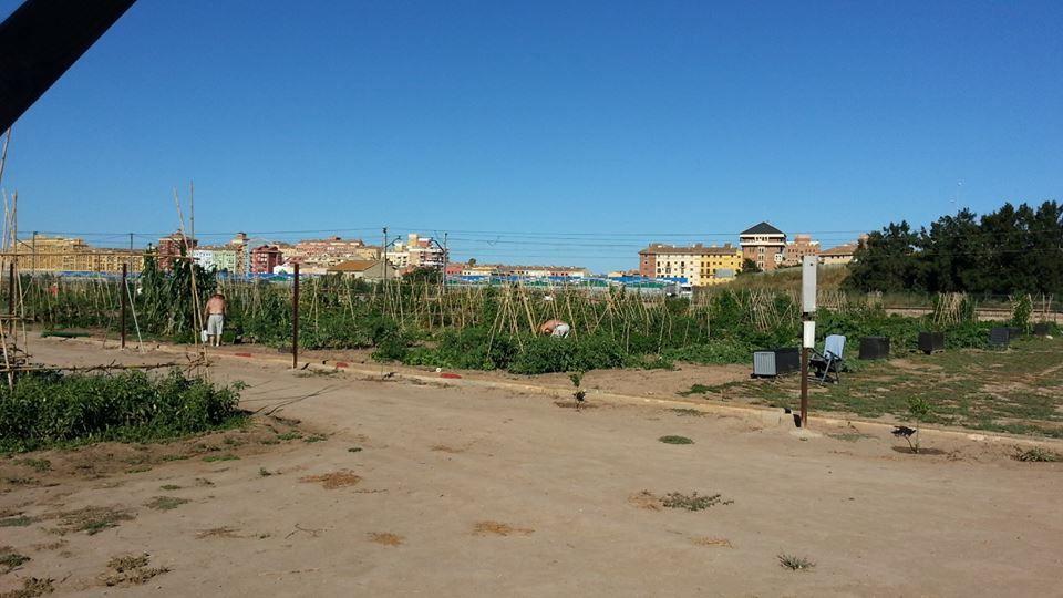 cultivo-de-las-habas-panoramica-huertos