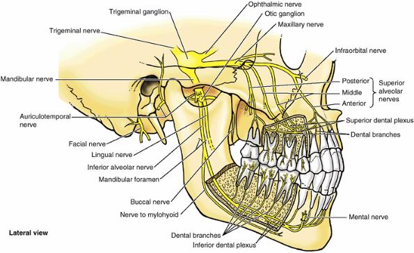 Нерв от зуба отдает в голову
