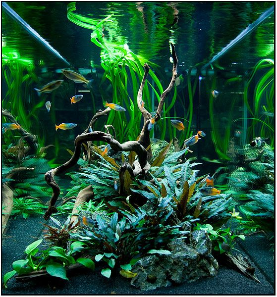 Side-view of a freshwater planted tank Aquascaping Pinterest