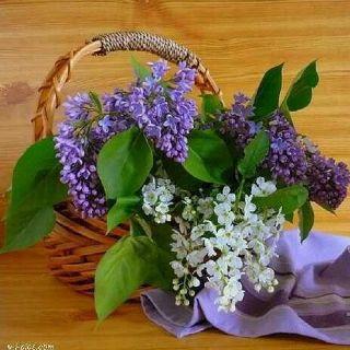 Basket full of lilacs spring has sprung pinterest
