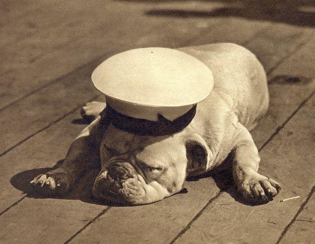 Sailor Bulldoghot…ol