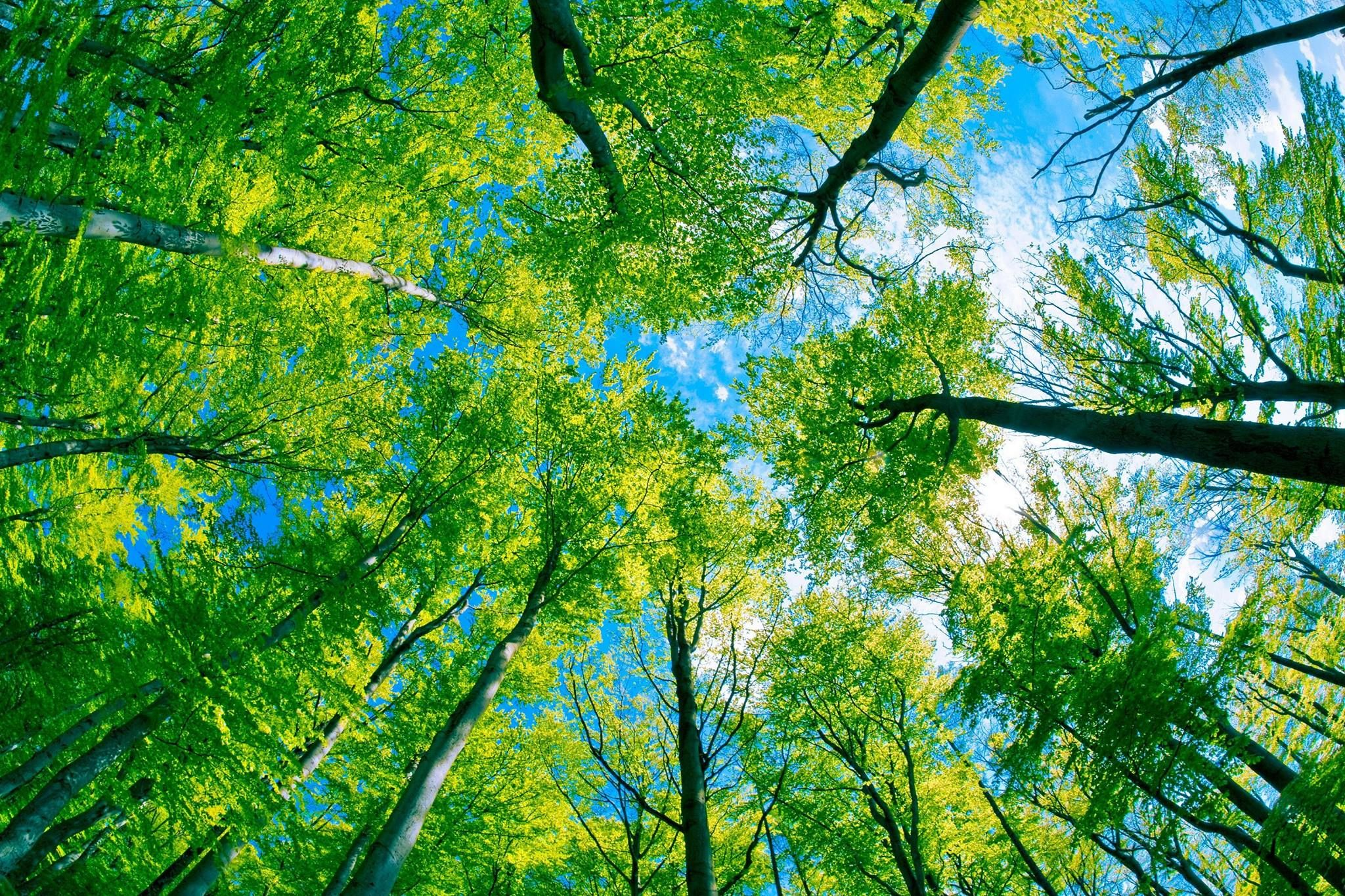 Tree canopy natural world pinterest for Canopy of trees