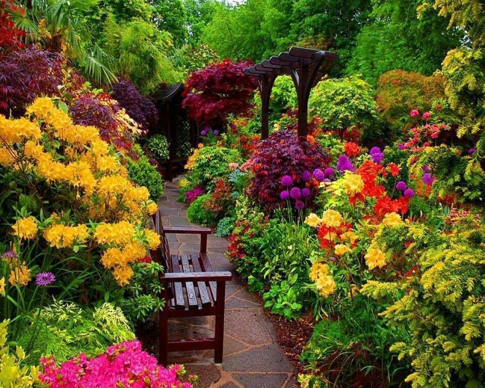 Colorful flowers garden garden plants pinterest for Pics of colourful roses