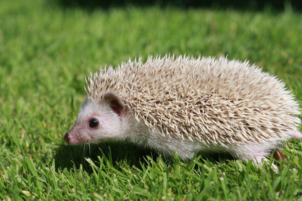 Baby Hedgehogs Auto Design Tech