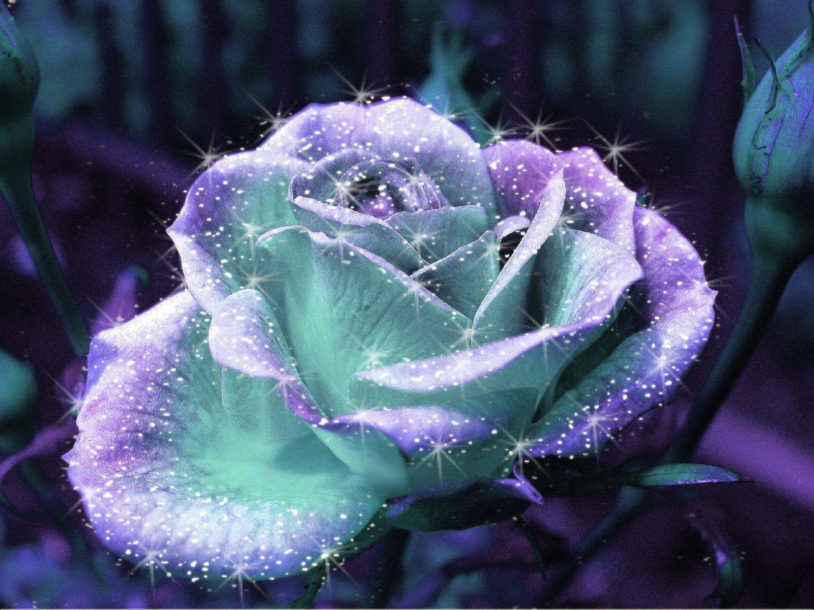 Http Pinterest Com Pin 509610514057530884
