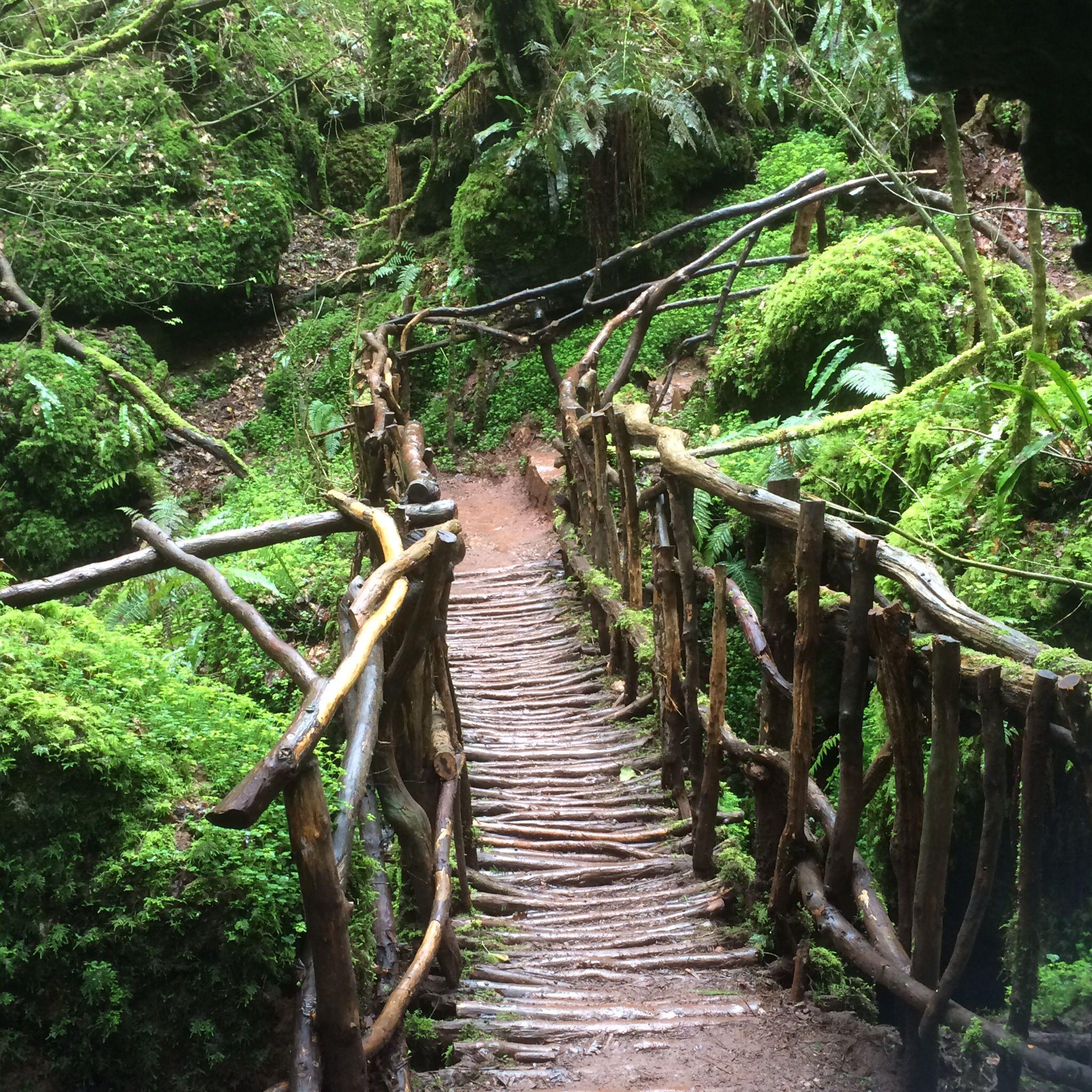 forest of dean walks pdf