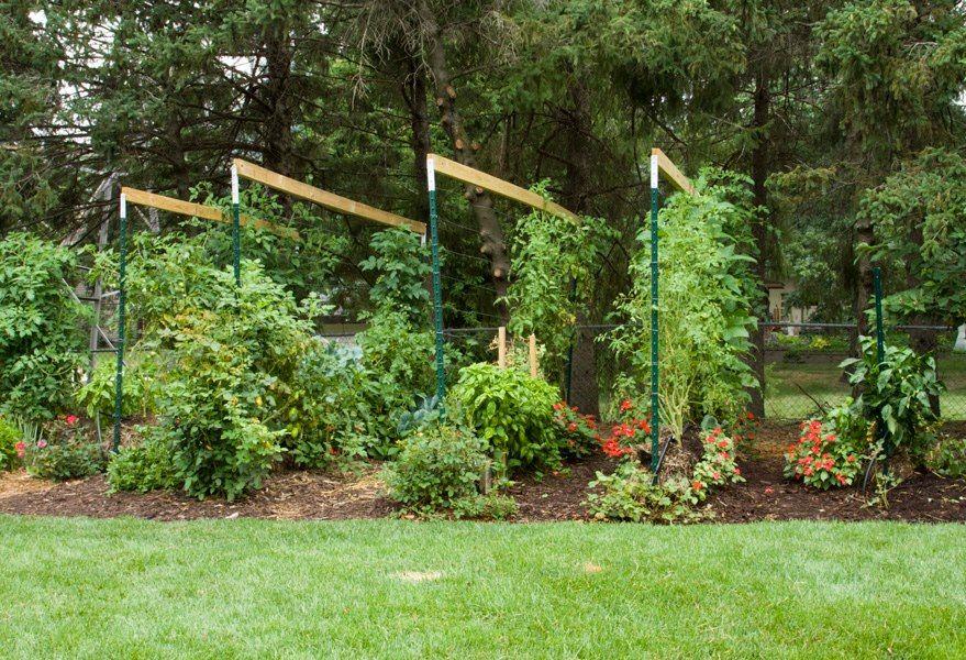 This a Straw Bale Garden Gardening Pinterest