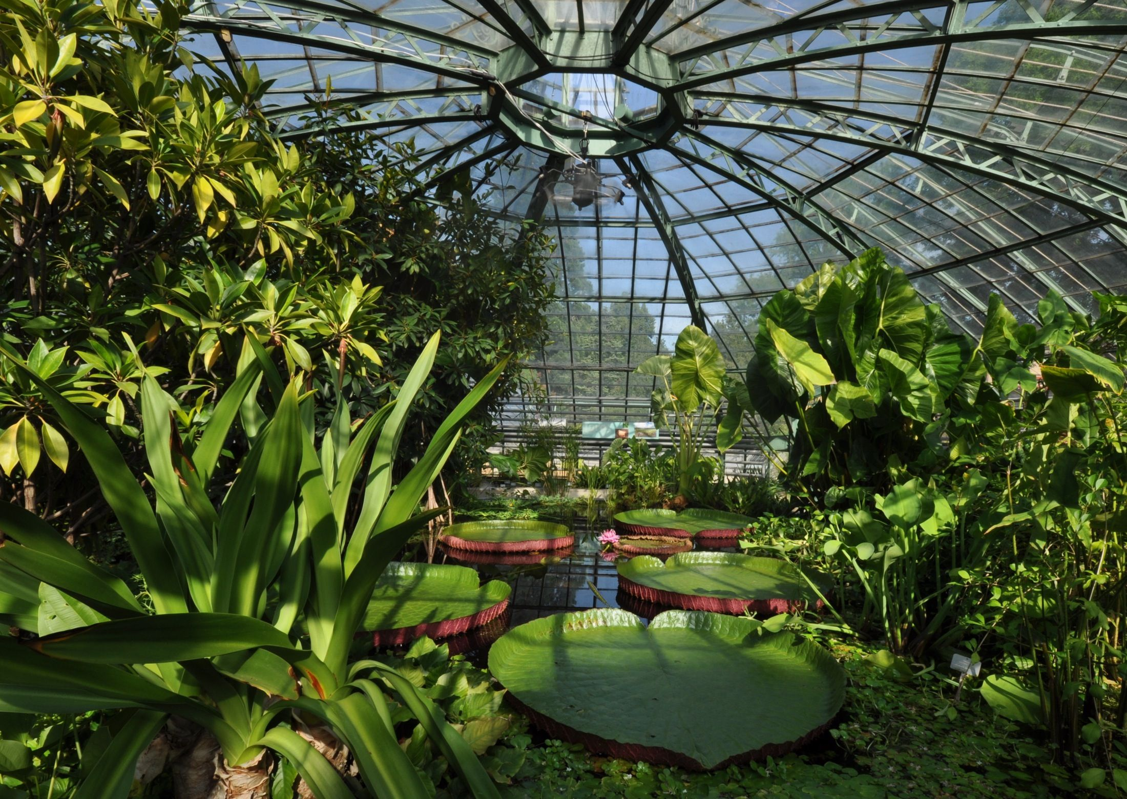 Botanical gardens of berlin germany outdoor and indoor for Indoor botanical gardens