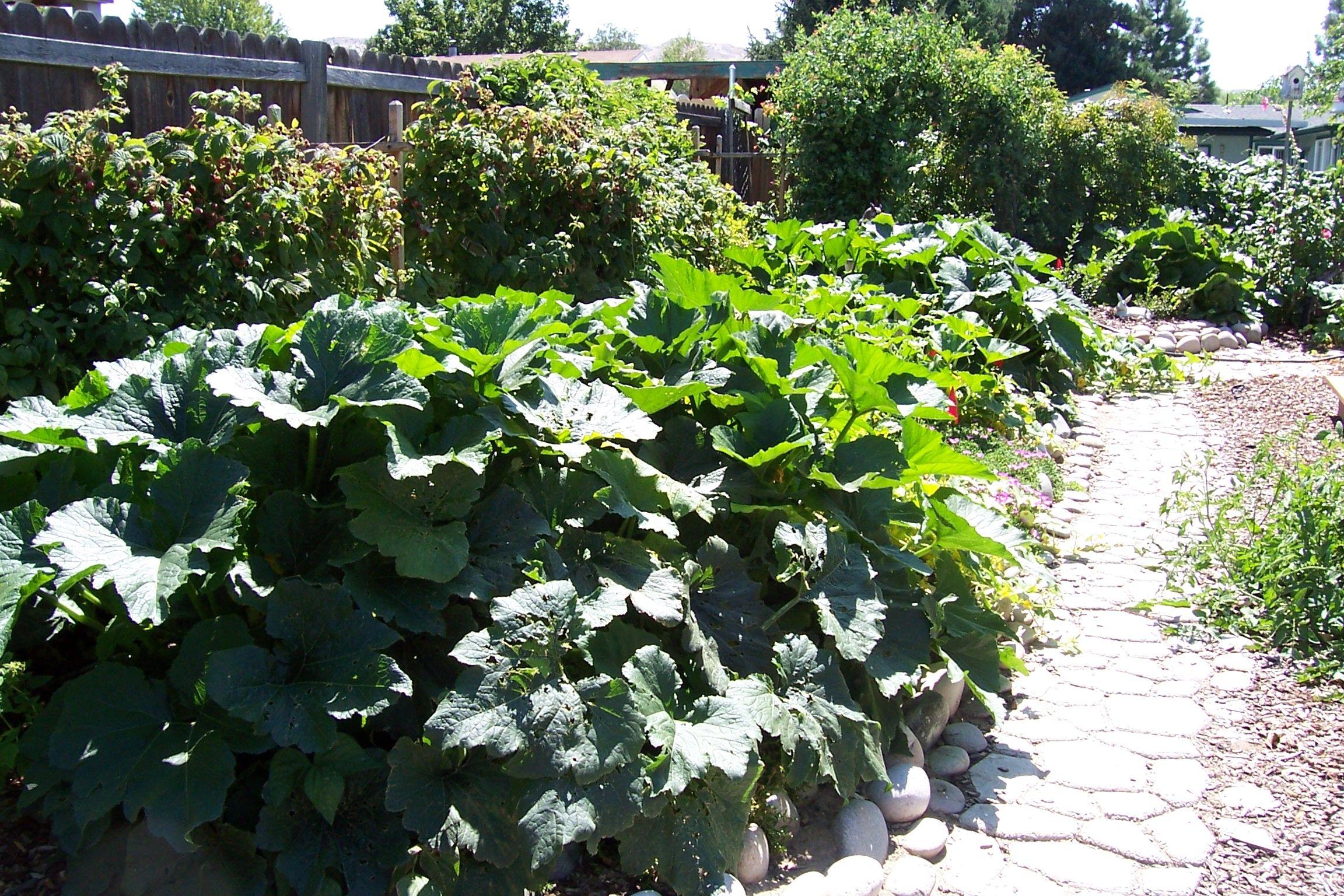 Zucchini in my garden gardening pinterest for Landscape my garden