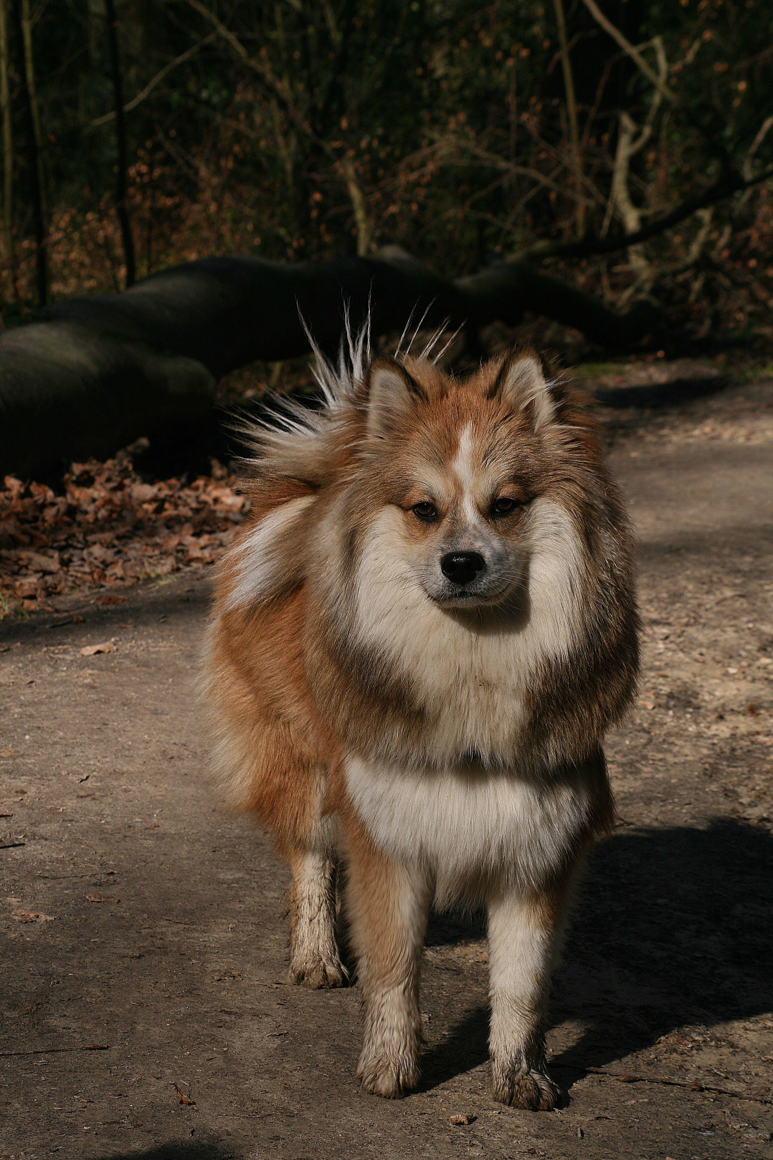 Elo #felixchien | Dog Breeds A - Z | Pinterest