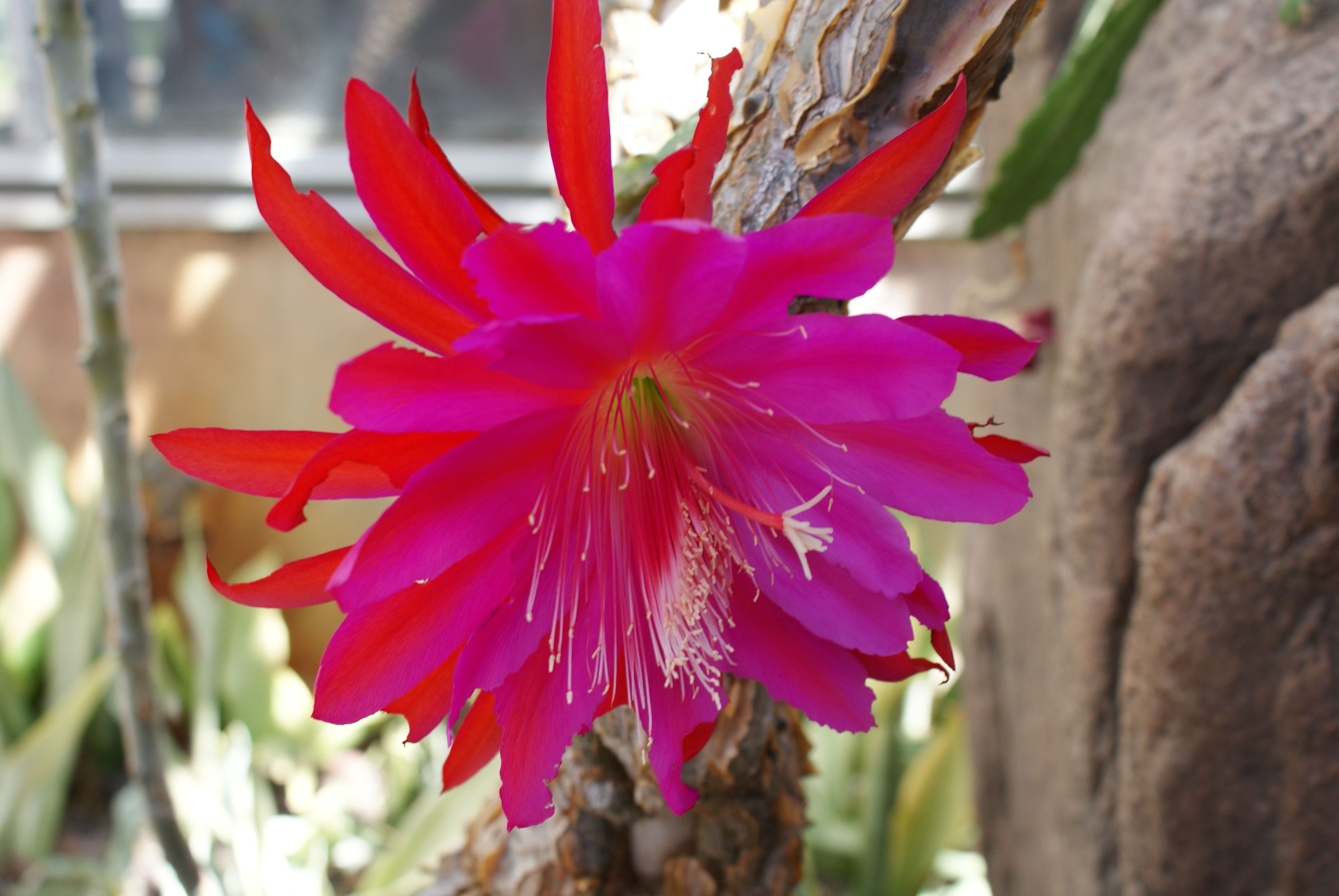 Amazing flower photo | Flower Power | Pinterest
