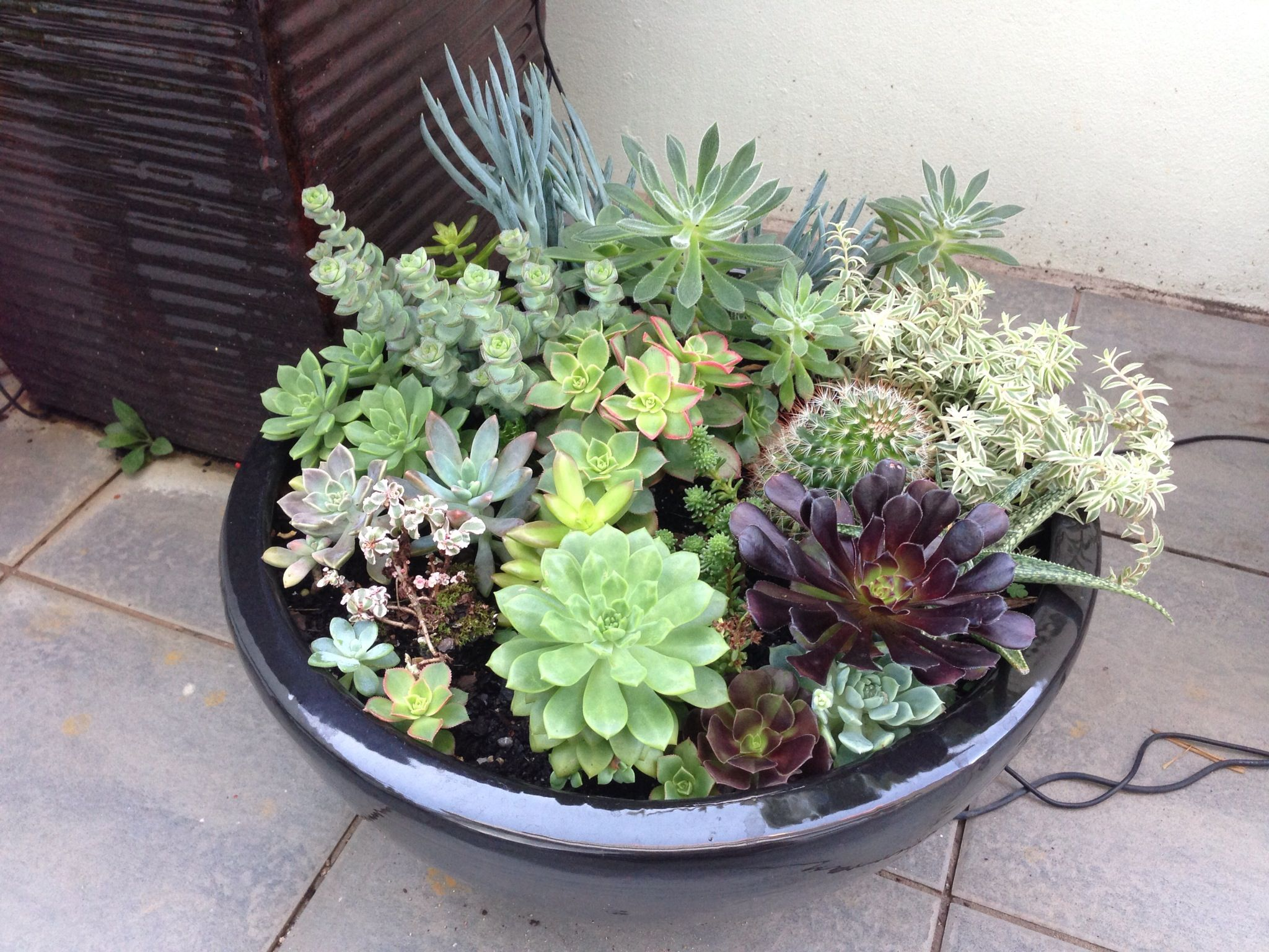 Succulent garden flowers plants arrangements trees for Garden arrangement