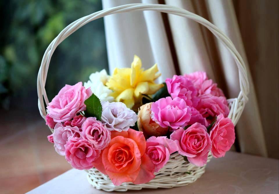 carols flowers and balloons northampton