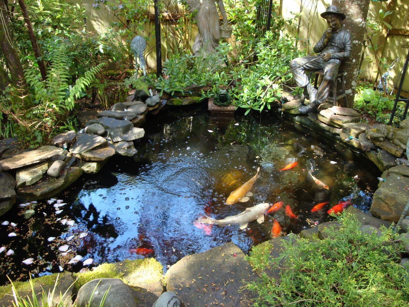 Our fish pond donald pinterest for Garden pond videos