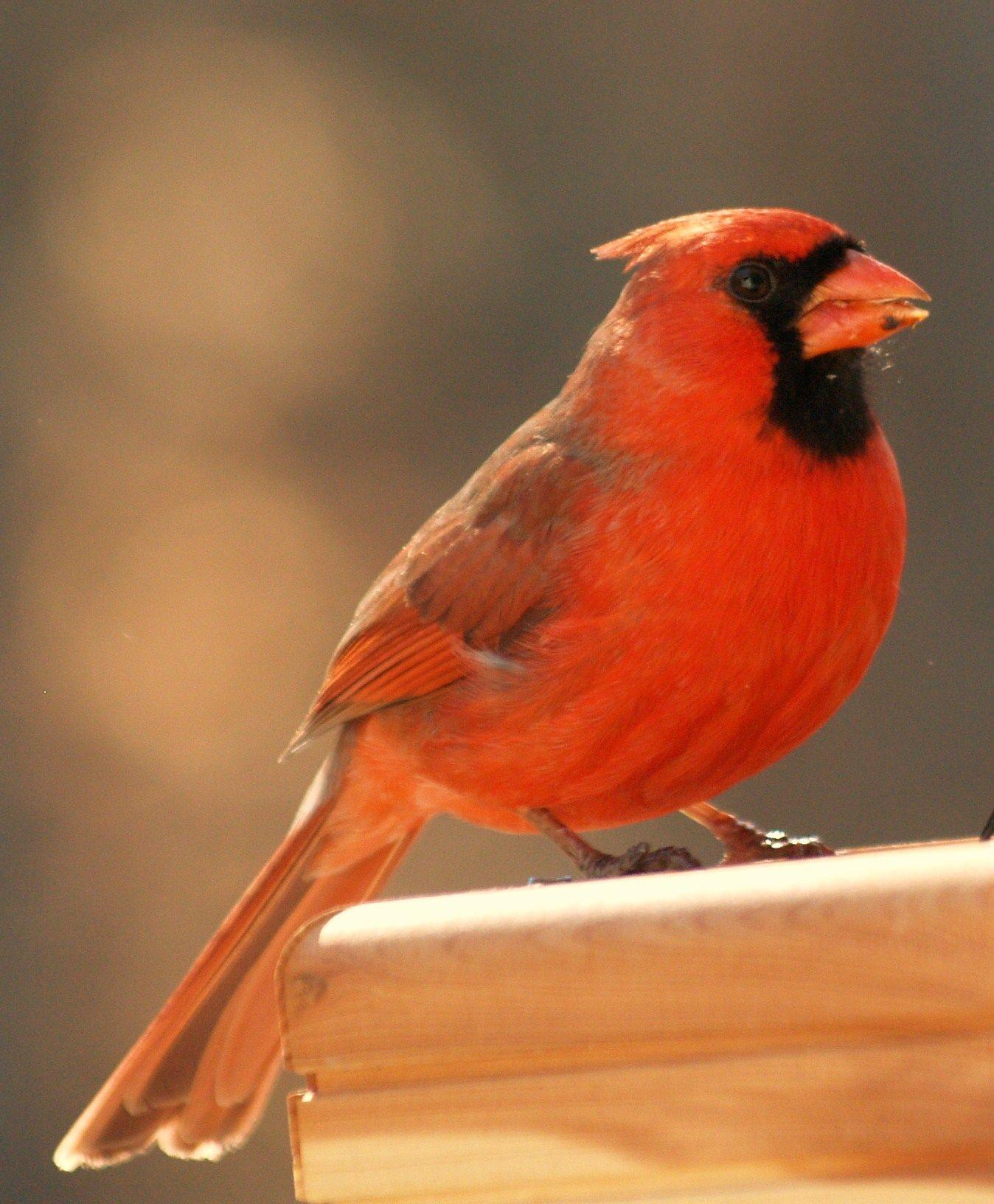 red bird nest and - photo #30