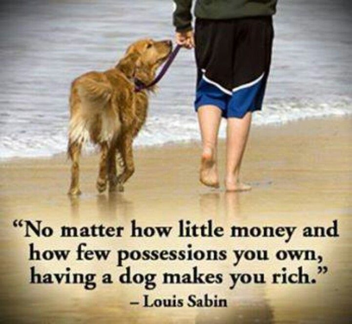 Dog loyalty quotes - photo#21