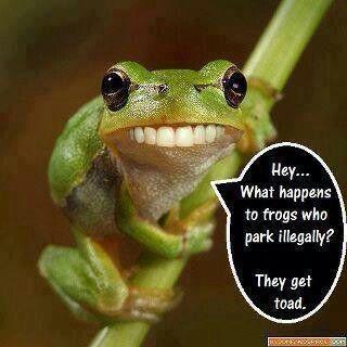 frog funniness | Funny shit | Pinterest Frog Puns