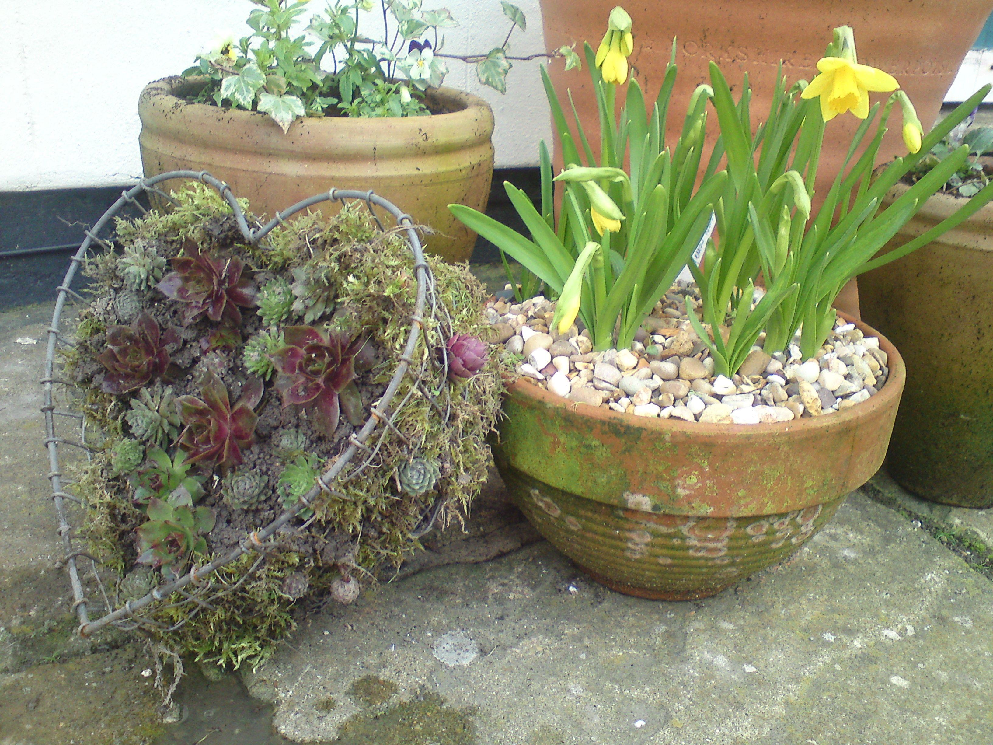 Spring garden ideas on pinterest photograph spring pots for Spring garden ideas