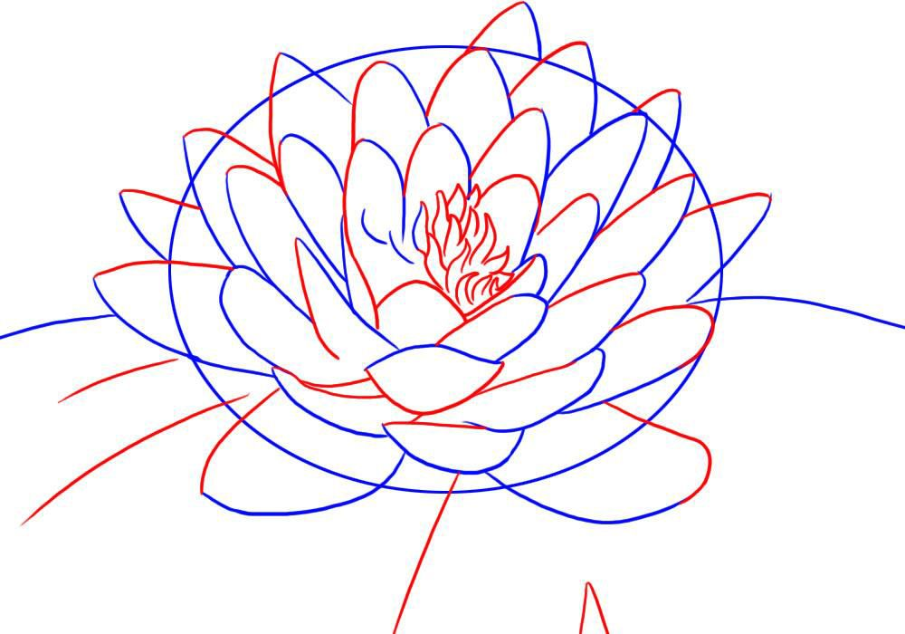 lotus flower line drawing - photo #28