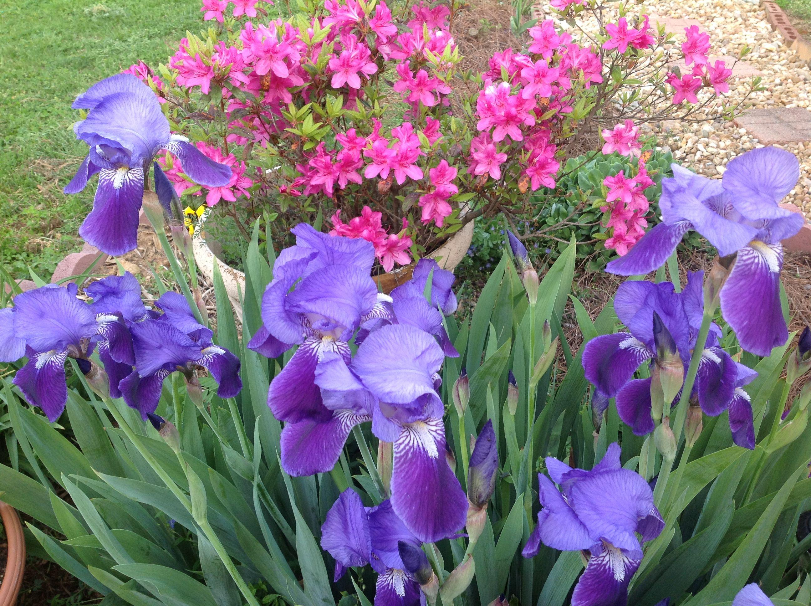 flowers and more murfreesboro
