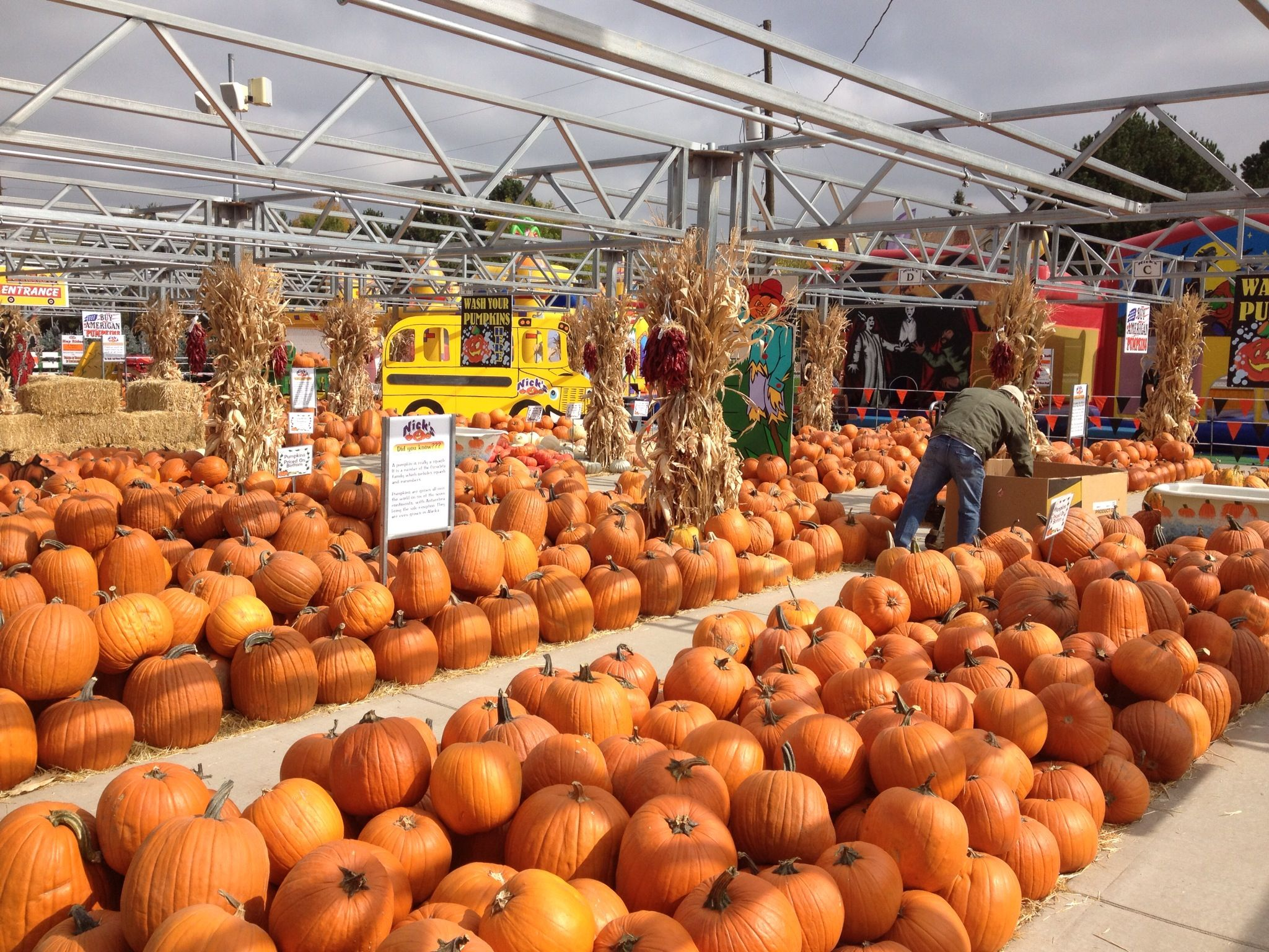 Pin By Nick 39 S Garden Center And Farm Market On Halloween Pinterest