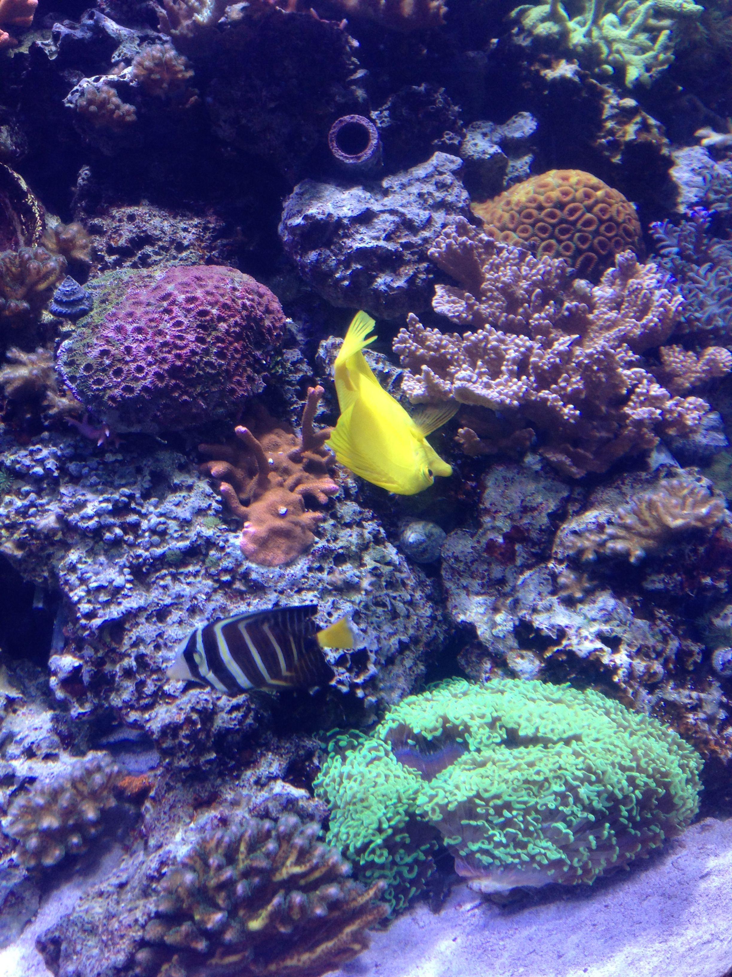 Tropical fish beautiful ocean pinterest for Beautiful tropical fish