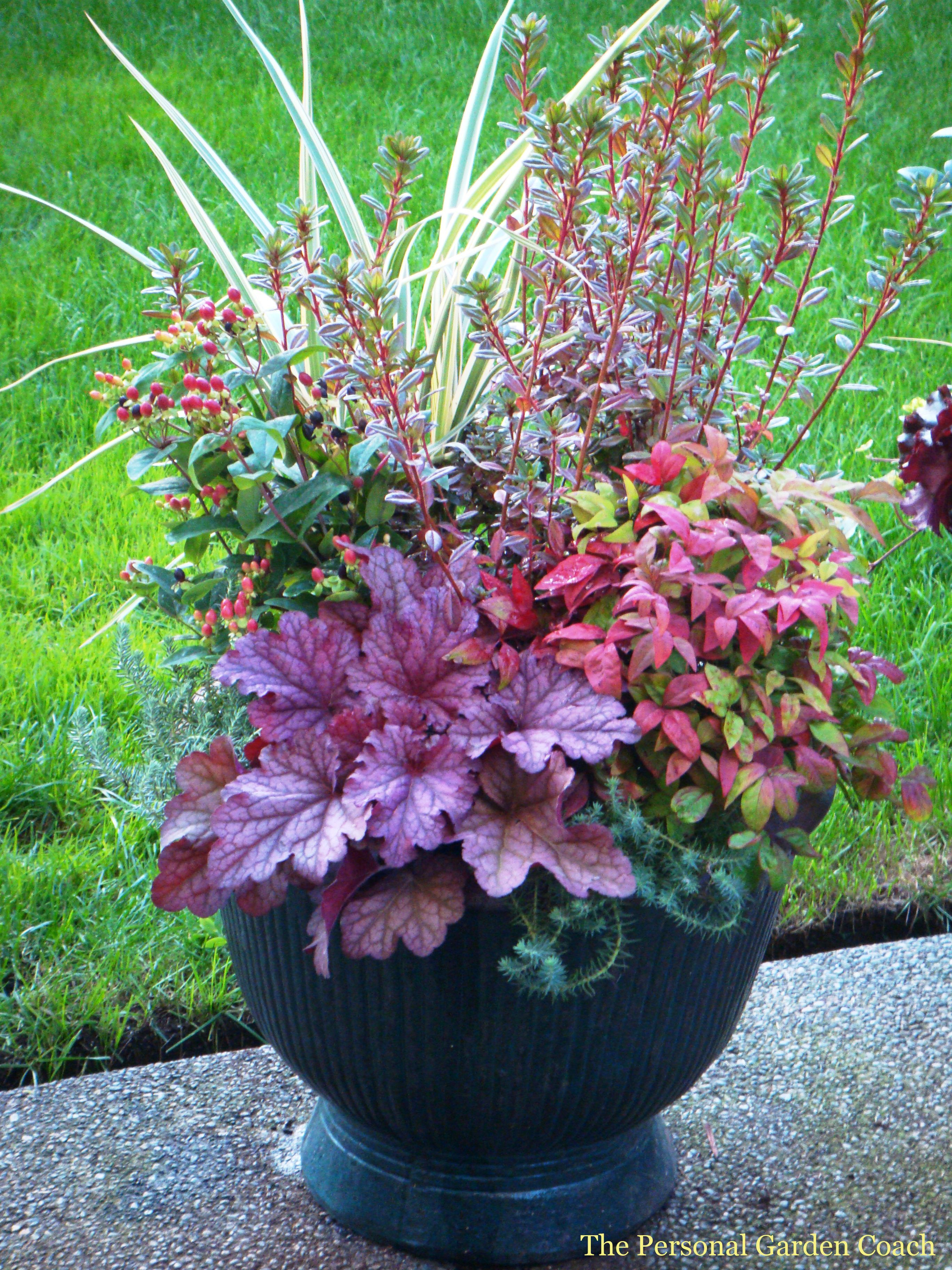 Spikes the garden pinterest for Container gardening ideas