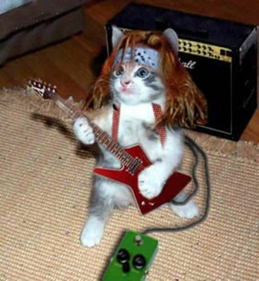 Cat scratch fever funny stuff pinterest for What does cat scratch fever look like